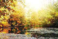 Colorful autumn sunny bright landscape Stock Images