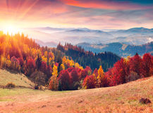 Colorful autumn sunrise in the Carpathian mountains. stock images