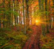 Colorful autumn sunrise in dark mountain forest. Stock Photography
