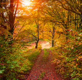 Colorful autumn sunrise in forest with old road Royalty Free Stock Images