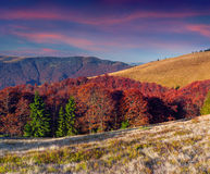 Colorful autumn sunrise in the mountains. Stock Photos