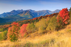 Colorful autumn sunrise in the Utah mountains. Stock Images