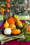 Colorful autumn or Thanksgiving background Stock Photos