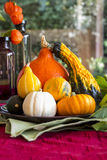 Colorful autumn or Thanksgiving background Stock Images