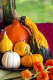 Colorful autumn or Thanksgiving background Royalty Free Stock Images