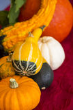 Colorful autumn or Thanksgiving background Royalty Free Stock Photography
