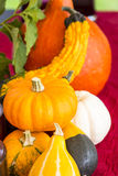 Colorful autumn or Thanksgiving background Stock Image