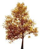 Colorful autumn tree Stock Photos