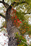 Colorful Autumn Tree Branch Curves Upward Royalty Free Stock Photo