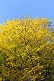 Colorful autumn tree in forest Stock Photo