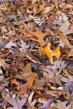 Colorful Autumn Tree Leaves Background Royalty Free Stock Image