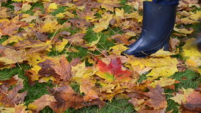 Colorful autumn tree leaves meadow grass woman rubber boots walk. Colorful autumn tree leaves on meadow grass and woman in rubber boots walk stock footage