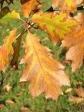 Colorful autumn tree Royalty Free Stock Photos