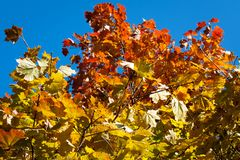 Colorful autumn trees Stock Images