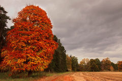 Colorful autumn trees Royalty Free Stock Image