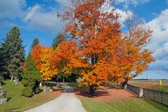 Colorful autumn trees Stock Photo