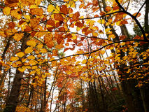 Colorful autumn trees. Colorful leaves on trees on an autumn day Royalty Free Stock Photo
