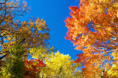 Colorful Autumn trees against blue sky Royalty Free Stock Photos