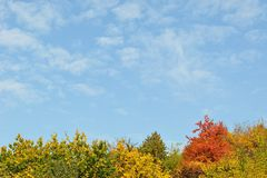 Colorful Autumn Trees And Sky Royalty Free Stock Image