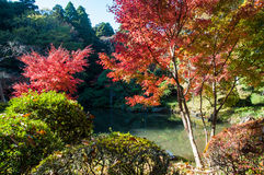 Colorful autumn trees around the pond Royalty Free Stock Image
