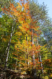 Colorful autumn trees. Autumn landscape background Royalty Free Stock Photo