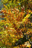 Colorful autumn trees. Autumn landscape background Royalty Free Stock Photography
