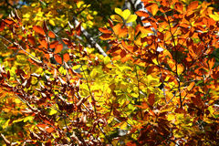 Colorful autumn trees. Autumn landscape background Royalty Free Stock Photos