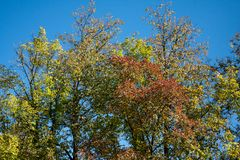 Colorful autumn trees. On a background of a clear blue sky royalty free stock photos