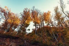 Colorful autumn trees. On hill slope royalty free stock photo