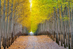 Colorful autumn trees and dirt road Royalty Free Stock Images