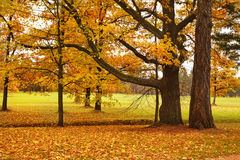 Colorful autumn trees fallen leaves in park Stock Photography