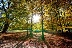 Colorful autumn trees Stock Photos