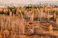 Colorful autumn trees in forest. Royalty Free Stock Photos