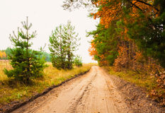 Colorful Autumn Trees In Forest Stock Image