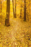 Colorful Autumn Trees In Forest Royalty Free Stock Photos