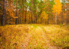 Colorful Autumn Trees In Forest Stock Photography
