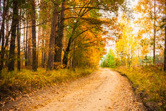 Colorful Autumn Trees In Forest Stock Images