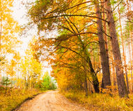 Colorful Autumn Trees In Forest Stock Photos
