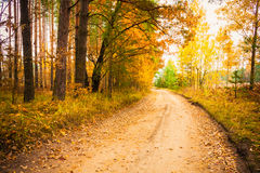 Colorful Autumn Trees In Forest Stock Photo