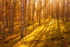Colorful Autumn Trees In Forest Royalty Free Stock Images