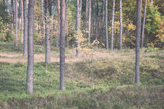 Colorful autumn trees in green forest with sun rays Royalty Free Stock Image