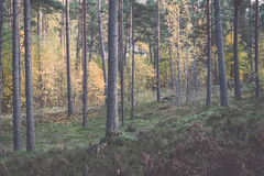 Colorful autumn trees in green forest with sun rays Stock Image