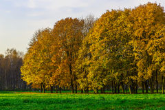 Colorful Autumn Trees on Green Lawn Stock Photos