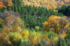 Colorful autumn trees in hill Stock Images