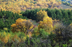 Colorful autumn trees in hill Stock Photos