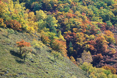 Colorful autumn trees in hill Stock Photography