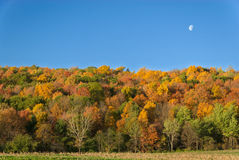 Colorful Autumn Trees Royalty Free Stock Photography