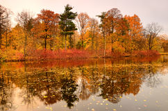 Colorful autumn trees on the lake Stock Images