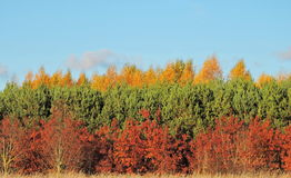 Colorful autumn trees, Lithuania Royalty Free Stock Photography