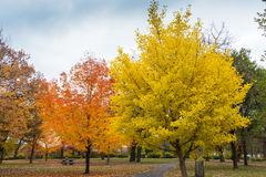 Colorful Autumn Trees. These are trees in Autumn. This is in Minnehaha Park in Minneapolis Stock Photos